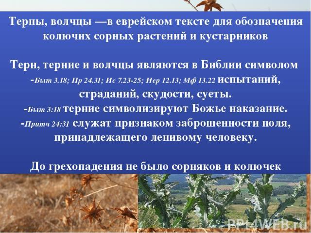 Терны, волчцы —в еврейском тексте для обозначения колючих сорных растений и кустарников Терн, терние и волчцы являются в Библии символом -Быт 3.18; Пр 24.31; Ис 7.23-25; Иер 12.13; Мф 13.22 испытаний, страданий, скудости, суеты. -Быт 3:18 терние сим…