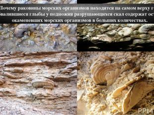 Почему раковины морских организмов находятся на самом верху гор? Обвалившиеся гл