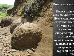 Волгоградская область Нашел их пастух из села Мокрая Ольховка. После сильного до
