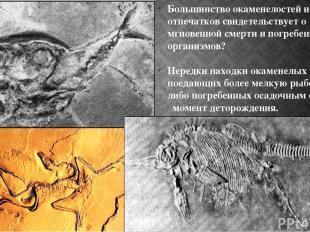 Большинство окаменелостей и отпечатков свидетельствует о мгновенной смерти и пог