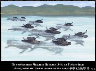 По сообщениям Чарльза Лайеля (1846) на Тибете было обнаружено пятьдесят диких бы
