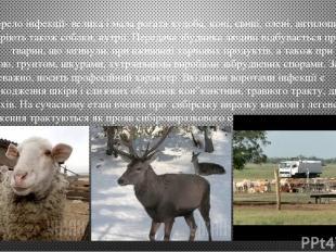 Джерело інфекції- велика і мала рогата худоба, коні, свині, олені, антилопи, буй