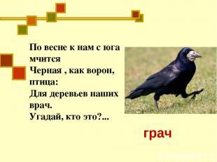 По весне к нам с юга мчится Черная , как ворон, птица: Для деревьев наших врач.