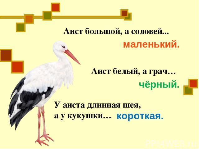 Аист большой, а соловей... маленький. Аист белый, а грач… чёрный. У аиста длинная шея, а у кукушки… короткая.
