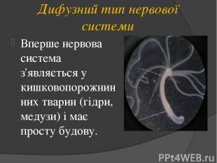 Дифузний тип нервової системи Вперше нервова система з'являється у кишковопорожн