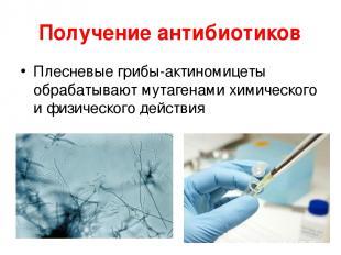 Получение антибиотиков Плесневые грибы-актиномицеты обрабатывают мутагенами хими