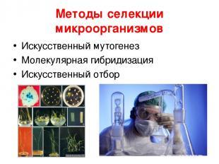Методы селекции микроорганизмов Искусственный мутогенез Молекулярная гибридизаци