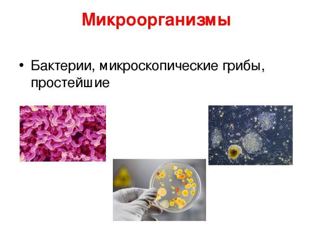 Микроорганизмы Бактерии, микроскопические грибы, простейшие