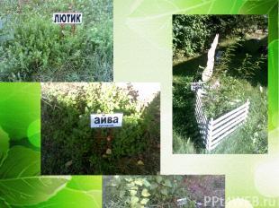Растительный мир на территории детского сада