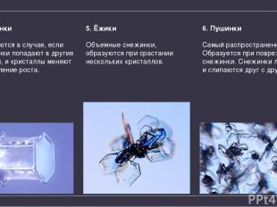 4. Запонки Образуются вслучае, если Пластинки попадают вдругие условия, икрис