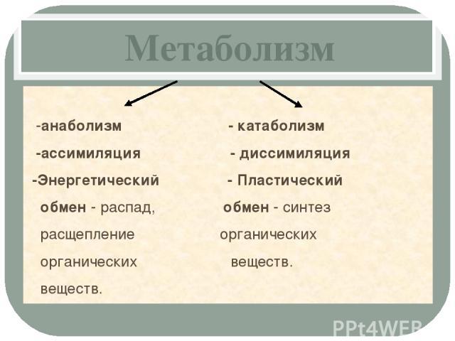 Метаболизм -анаболизм - катаболизм -ассимиляция - диссимиляция -Энергетический - Пластический обмен - распад, обмен - синтез расщепление органических органических веществ. веществ.