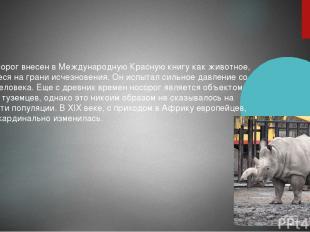 Белый носорог внесен в Международную Красную книгу как животное, находящееся на
