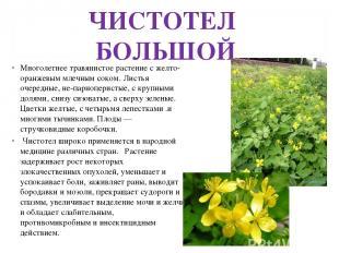 ЧИСТОТЕЛ БОЛЬШОЙ Многолетнее травянистое растение с желто-оранжевым млечным соко