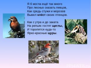 Я б могла ещё так много Про лесных сказать певцов, Как средь стужи и морозов Выв