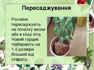 Пересаджування Рослини пересаджують на початку весни або в кінці літа. Новий гор