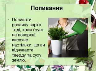 Поливання Поливати рослину варто тоді, коли ґрунт на поверхні висохне настільки,