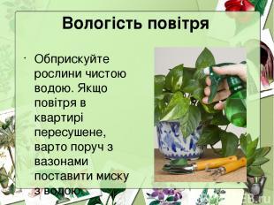 Вологість повітря Обприскуйте рослини чистою водою. Якщо повітря в квартирі пере