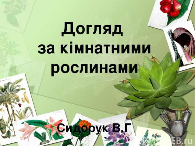 Догляд за кімнатними рослинами Сидорук В.Г
