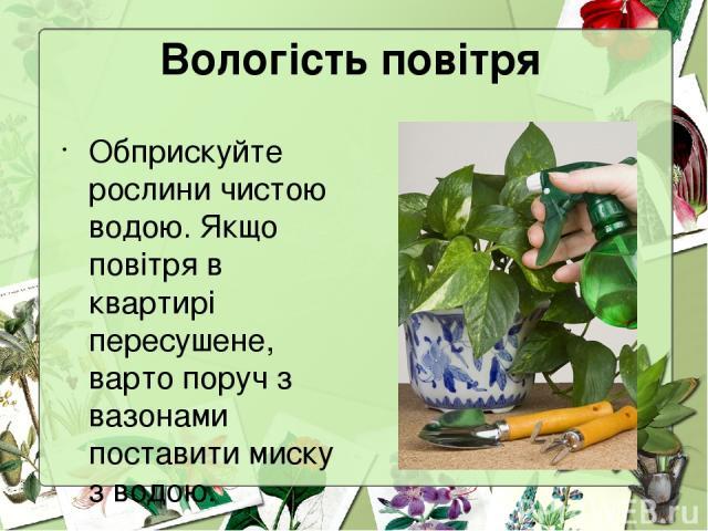 Вологість повітря Обприскуйте рослини чистою водою. Якщо повітря в квартирі пересушене, варто поруч з вазонами поставити миску з водою.