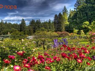 Флора Северная часть Канады покрыта тундрой, которая проникает далеко к югу. Зд