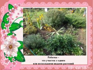 Рабатка – это участок с одним или несколькими видами растений Рабатка – это учас