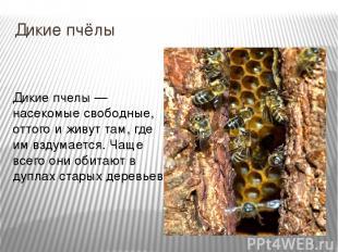 Дикие пчёлы Дикие пчелы — насекомые свободные, оттого и живут там, где им вздума