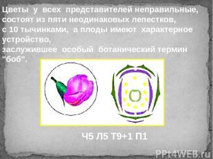 Цветы у всех представителей неправильные, состоят из пяти неодинаковых лепест
