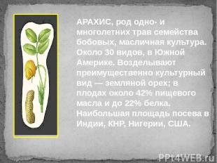 АРАХИС, род одно- и многолетних трав семейства бобовых, масличная культура. Окол