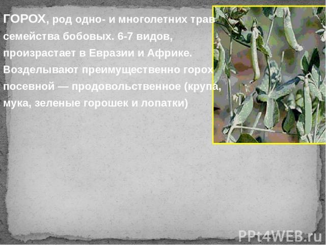 ГОРОХ, род одно- и многолетних трав семейства бобовых. 6-7 видов, произрастает в Евразии и Африке. Возделывают преимущественно горох посевной — продовольственное (крупа, мука, зеленые горошек и лопатки)