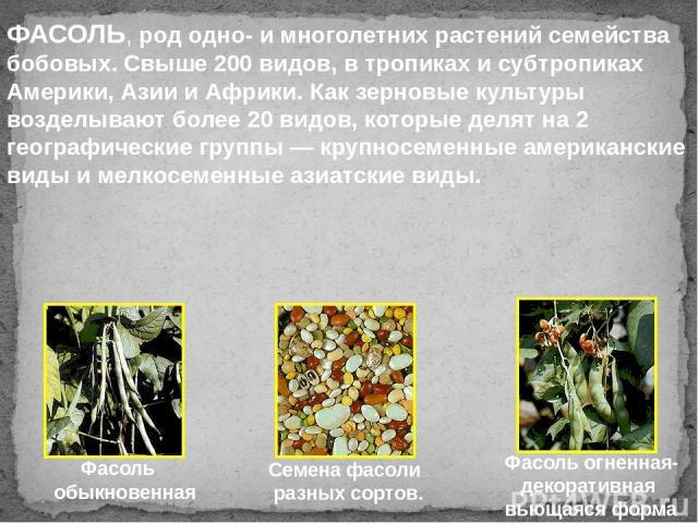 Фасоль обыкновенная Фасоль огненная- декоративная вьющаяся форма Семена фасоли разных сортов. ФАСОЛЬ, род одно- и многолетних растений семейства бобовых. Свыше 200 видов, в тропиках и субтропиках Америки, Азии и Африки. Как зерновые культуры возделы…