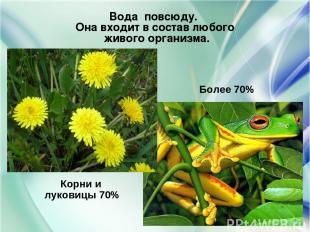 Корни и луковицы 70% Более 70% Вода повсюду. Она входит в состав любого живого о