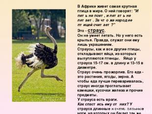 """В Африке живет самая крупная птица в мире. О ней говорят:""""И петь не поет, и лет"""