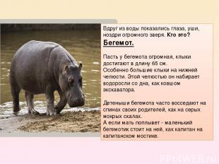 Вдруг из воды показались глаза, уши, ноздри огромного зверя. Кто это? Бегемот. П