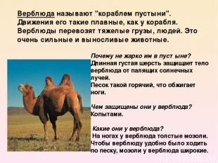 Почему не жарко им в пустыне? Длинная густая шерсть защищает тело верблюда от п