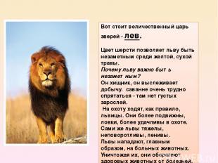 Вот стоит величественный царь зверей -лев. Цвет шерсти позволяет льву быть неза
