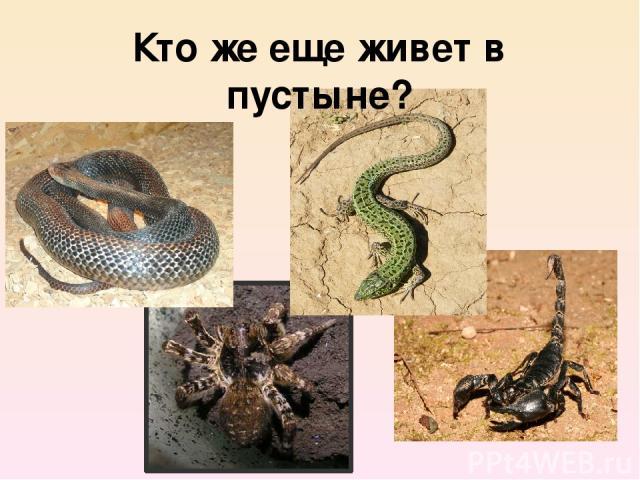 Кто же еще живет в пустыне?