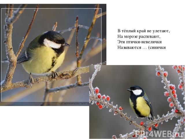 В тёплый край не улетают, На морозе распевают, Эти птички-невелички Называются … (синички