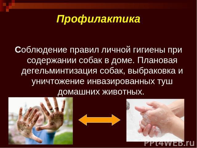 Профилактика Соблюдение правил личной гигиены при содержании собак в доме. Плановая дегельминтизация собак, выбраковка и уничтожение инвазированных туш домашних животных.