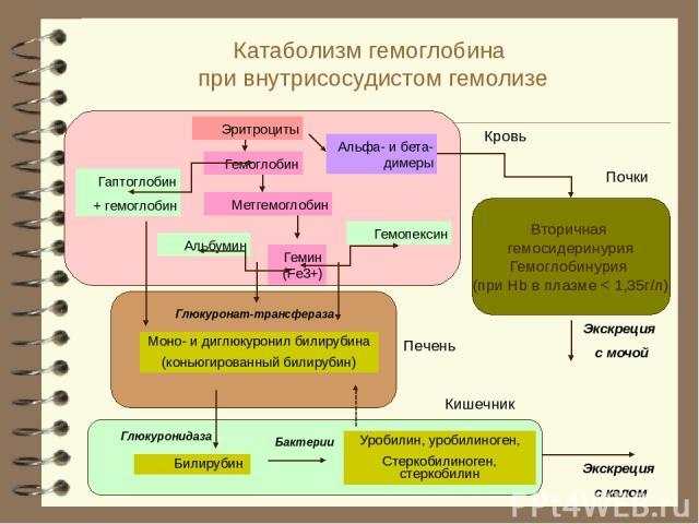 Катаболизм гемоглобина при внутрисосудистом гемолизе
