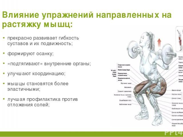 Влияние упражнений направленных на растяжку мышц: прекрасно развивает гибкость суставов и их подвижность; формируют осанку; «подтягивают» внутренние органы; улучшают координацию; мышцы становятся более эластичными; лучшая профилактика против отложен…