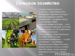 Сельское хозяйство Главная отрасль сельского хозяйства — растениеводство. Выращи