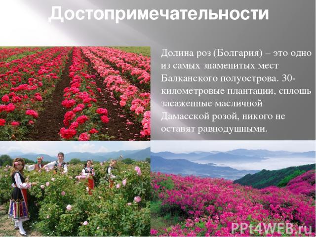 Достопримечательности Долина роз (Болгария) – это одно из самых знаменитых мест Балканского полуострова. 30-километровые плантации, сплошь засаженные масличной Дамасской розой, никого не оставят равнодушными.