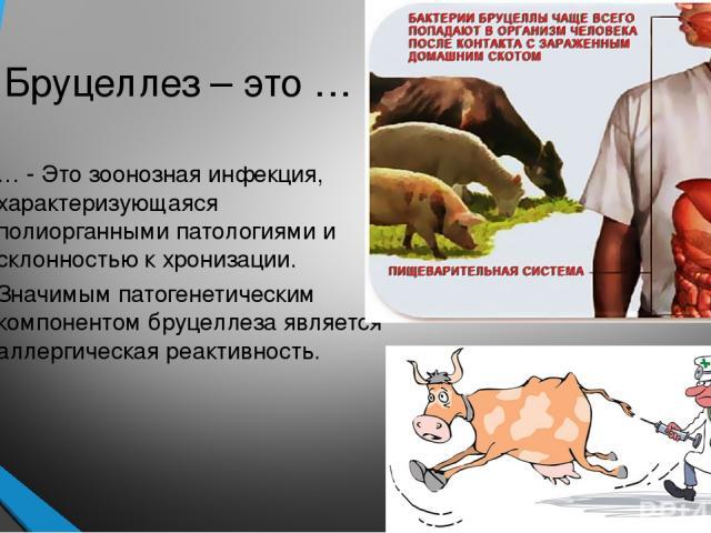 Бруцеллез – это … … - Это зоонозная инфекция, характеризующаяся полиорганными патологиями и склонностью к хронизации. Значимым патогенетическим компонентом бруцеллеза является аллергическая реактивность.