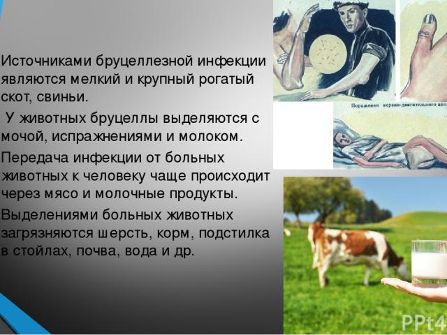 Источниками бруцеллезной инфекции являются мелкий и крупный рогатый скот, свиньи. У животных бруцеллы выделяются с мочой, испражнениями и молоком. Передача инфекции от больных животных к человеку чаще происходит через мясо и молочные продукты. Выдел…
