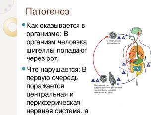 Патогенез Как оказывается в организме: В организм человека шигеллы попадают чере