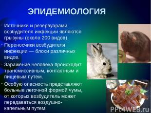 ЭПИДЕМИОЛОГИЯ Источники и резервуарами возбудителя инфекции являются грызуны (ок