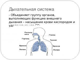 Дыхательная система - Объединяет группу органов, выполняющих функцию внешнего ды