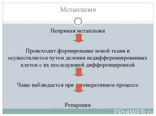 Метаплазия Непрямая метаплазия Происходит формирование новой ткани и осуществляе