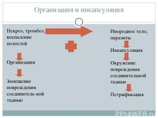 Организация и инкапсуляция Некроз, тромбоз, воспаление полостей Организация Заме