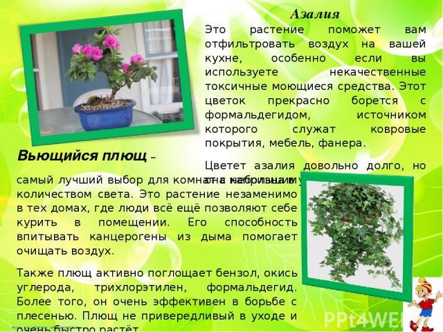 Азалия Это растение поможет вам отфильтровать воздух на вашей кухне, особенно если вы используете некачественные токсичные моющиеся средства. Этот цветок прекрасно борется с формальдегидом, источником которого служат ковровые покрытия, мебель, фанер…